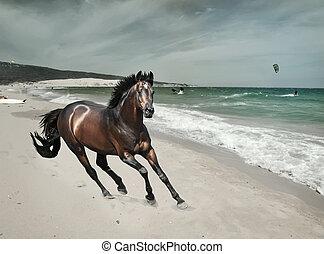 galloping, baía, esportiva, garanhão, mar, praia, arte, toned