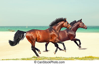galloping breed horses at sea beach