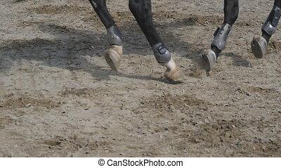 galloping., cheval, jockey, courses, barrière, sauts, competition., haut, pieds, lent, par, horseback., professionnel, fin, sport, promenades, mouvement