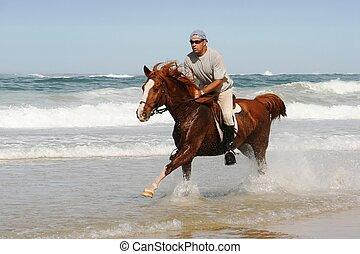 Galloping Horse at beach