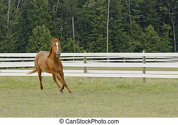 Horse in fenced pasture galloping around fencing