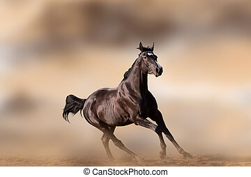 Young Budyonny horse galloping against brown background