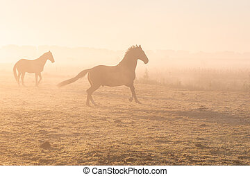 galloping horses on misty pasture