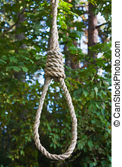 gallows on a tree in a forest