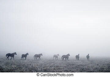 Horses galloping in the mist.