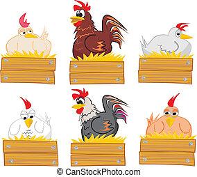 galo, palha, ninho, galinha