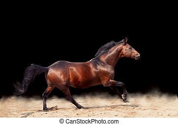 galopar, hermoso, juguetón, caballo, aislado, en, fondo negro