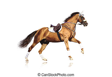 galoper, folâtre, cheval, isolé
