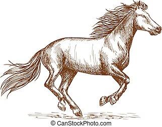 galoppo equino, schizzo, correndo, ritratto, bianco
