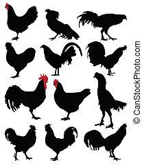 galos, e, galinhas