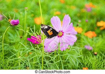 galsang, 花, ∥で∥, 蝶