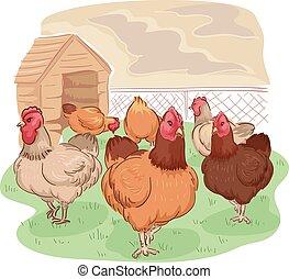 gama, gaiola, galinha, livre