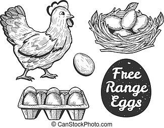 gama, jogo, ovos, livre