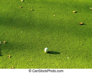 Game balls on the fake grass