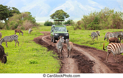 Game drive. Safari car on game drive with animals around,...