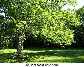 gammal, oaktree, och, bänk
