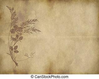 gammal, papper, eller, pergament