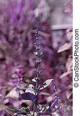 gammal, purpur, abstrakt, fokusera, Struktur, papper, bakgrund, blommig, mjuk