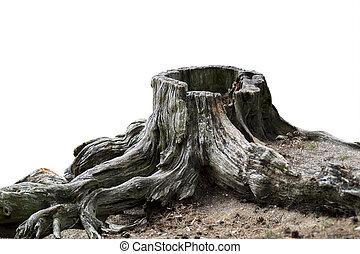 gammal, ridit ut, träd stövla