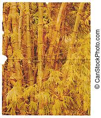gammal, sönderrivet, stycke om papper, med, den, struktur, av, bamboo., isolerat