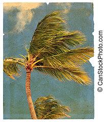 gammal, trasig sida, presentera, palm, träd., isolerat