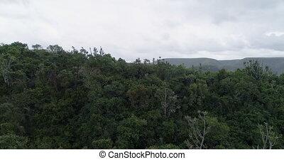 gammes, montagne, forêt, couvert, 4k