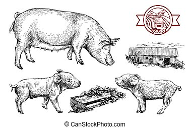 ganado, dibujos, dibujado, mano., cerdos
