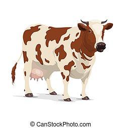 ganado, marrón, blanco, animal, novilla, granja, vaca
