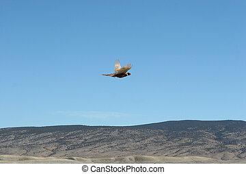Gane Bird