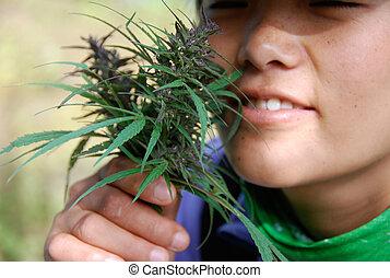 trekker inspects wild nepalese marijuana