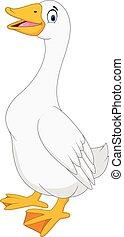 ganso, blanco, aislado, plano de fondo, caricatura