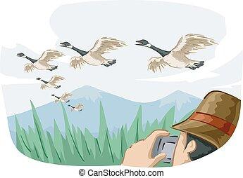 gansos, canadiense, migrate, foto, watcher, pájaro