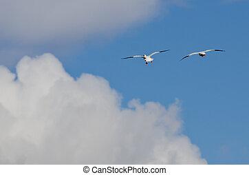 gansos, voando, dois, neve, alto, acima, nuvens