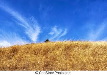 ganwoljae tall grass reeds