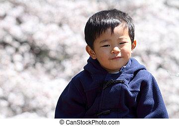 garçon, (2, cerise, japonaise, années, fleurs, old)