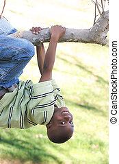 garçon, balance, arbre, jeune