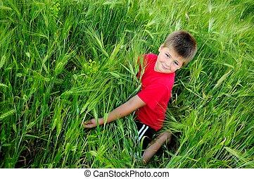 garçon, blé, champ vert