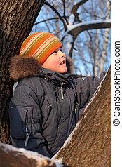 garçon, bois, arbre