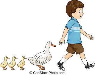 garçon, canetons, parade, gosse, canard