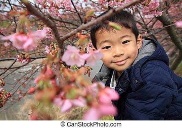 garçon, cerise, japonaise, (5, fleurs, old), années