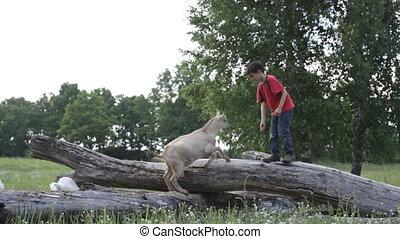 garçon, chèvre
