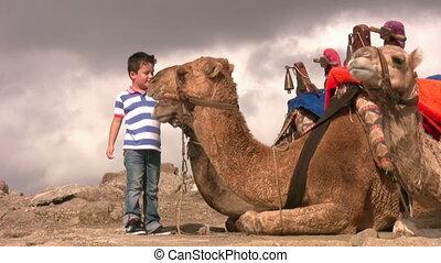 garçon, chameau