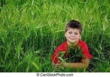 garçon, champ blé