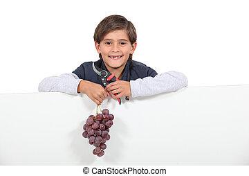 garçon, cisailles, raisins, tenue, tas