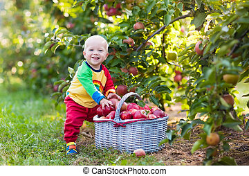 garçon, jardin, fruit, pommes, bébé, cueillette