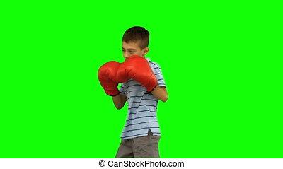 garçon, peu, boxin, gants, boxe