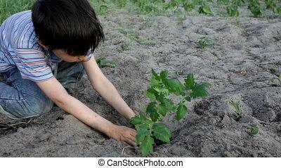 garçon, plantation arbres
