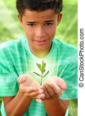 garçon, plante, pousse, lumière, adolescent, mains, ...