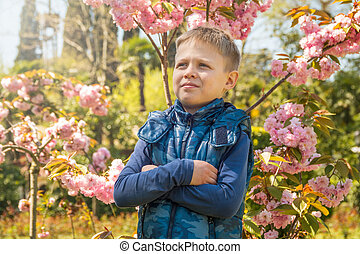 garçon, rayons, stands, eight-year-old, sakura, fleurir, sunset.