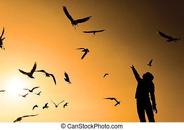 garçon, seagulls., silhouette